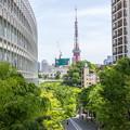 Photos: 東京タワーが見える