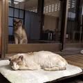 Photos: フー子とお母さん