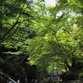 Photos: 深緑の公園