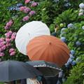Photos: 雨の花