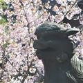 Photos: 玉縄桜~五所神社