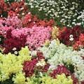 花壇~芝公園