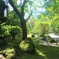 Photos: 鎌倉の報國寺