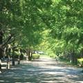緑トンネル 南郷公園