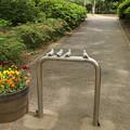 Photos: いきな公園