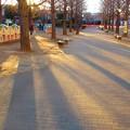 Photos: 斜光・・・