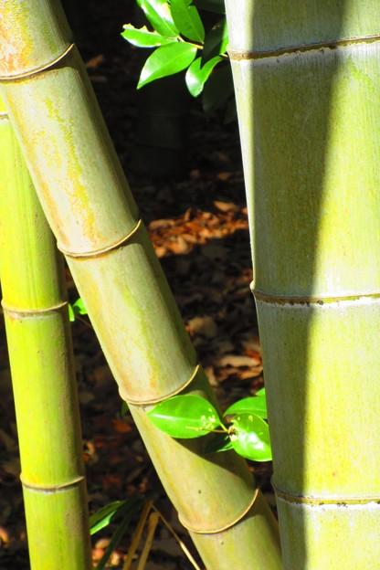 竹の間から・・