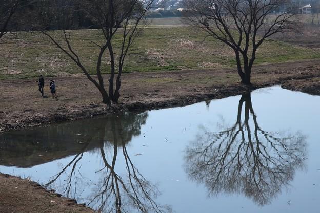 Photos: 池の散歩