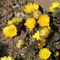 Photos: 春の訪れ・・・