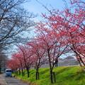 川沿いの春