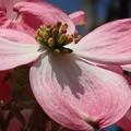 綺麗な花弁