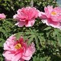 咲き誇る花弁たち・・・