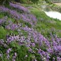 川辺の春・・・
