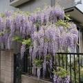 お庭が満開・・・