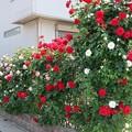 素敵なお庭ですね~