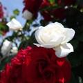 紅白の美女・・