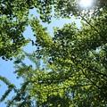 Photos: 暑い夏が・・・