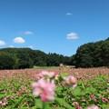 Photos: 秋空に一面の・・・・