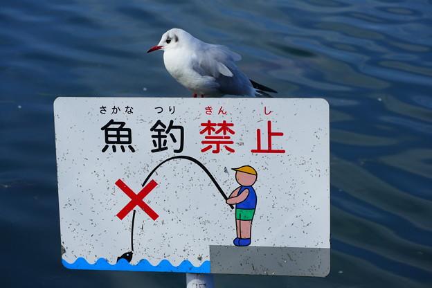 魚釣・・・駄目だって。