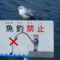 Photos: 魚釣・・・駄目だって。