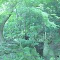 緑に満ちた場所
