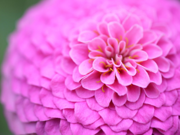 花びらが重なって。