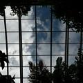 Photos: 温室の天井