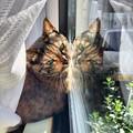 窓辺でのひなたぼっこが窓ガラスに反射