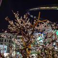 Photos: 駅前に咲く