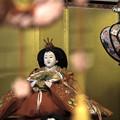 Photos: 古代雛