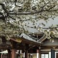 笹部桜 (2)