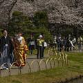 桜咲く三渓園 (2)