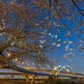 Photos: なごり桜
