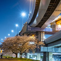 Photos: 江北インターに咲く