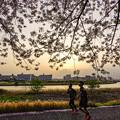 Photos: 夕日浴びて