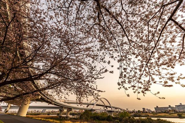 五色桜大橋1