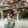 Photos: 和田倉噴水公園