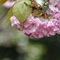Photos: 雨の御苑 (3)