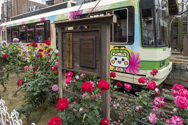 三ノ輪橋駅「さくらトラム (4)