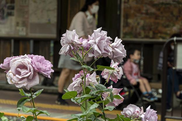 三ノ輪橋駅「さくらトラム (2)