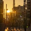 東京タワーのある風景 (1)