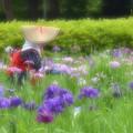 Photos: 花菖蒲田