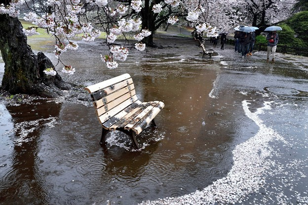 花散らし雨