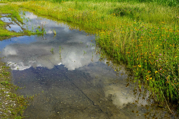 ルドベキア咲くいつもの散歩道4