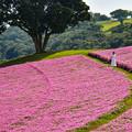Photos: ペチュニア咲くマザー牧場