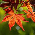 秋の便り (4)