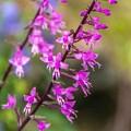 秋の便り 「湿生花園」 (4)