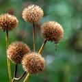秋の便り 「湿生花園」 (3)