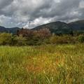 秋の便り 「湿生花園」 (2)