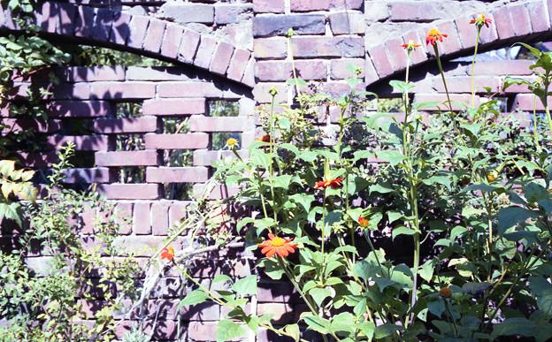Photos: 永代町の煉瓦塀